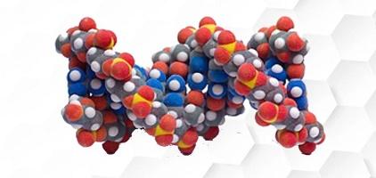 Производство гормонов